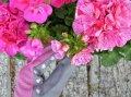 5 комнатных растений, очищающих воздух