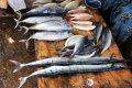 Медики назвали 9 сортов рыбы, которую лучше не покупать