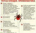 Как уберечься от клещей: советы доктора Комаровского